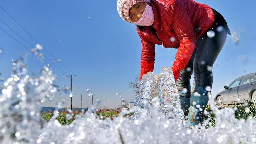 """河北滦州:冬小麦""""喝足""""封冻水"""