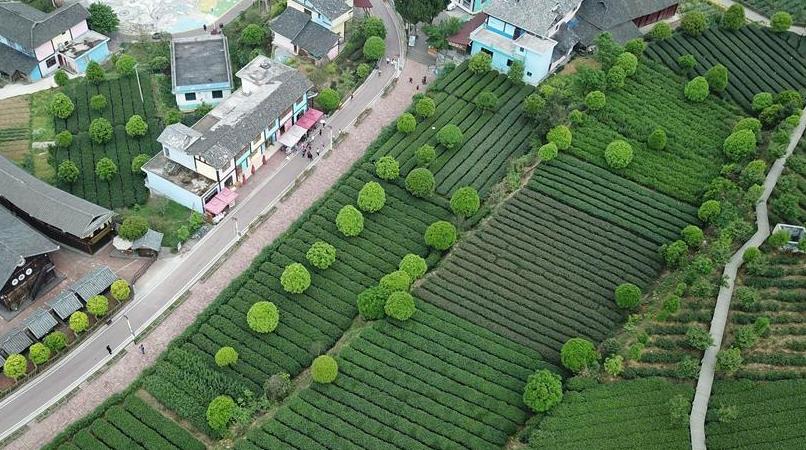 贵州湄潭:绿浪淘心 茶富万民