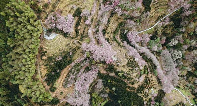 赏梅花 迎新春