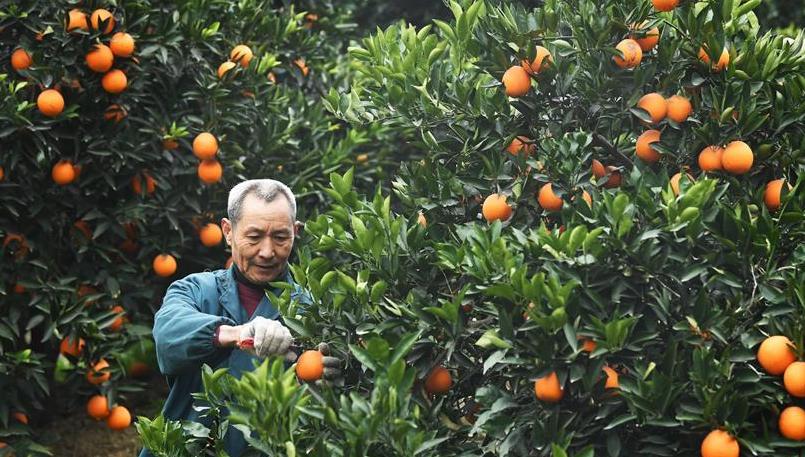 """一个橙子的八年""""蜕变史"""""""