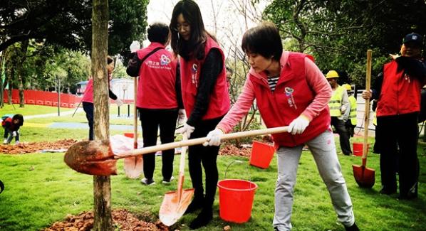 """""""山竹""""倒伏树木获重生 16棵紫薇树在景蜜公园生根发芽"""