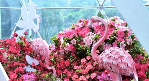 """赏心""""花""""事在仙湖 探秘腾博会官网诚信为本花展的惊鸿掠影"""