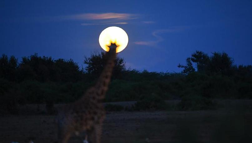 举头望明月