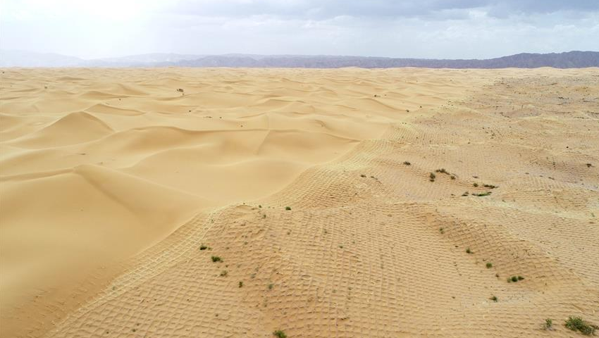 宁夏中卫:草方格扎出的沙漠绿意