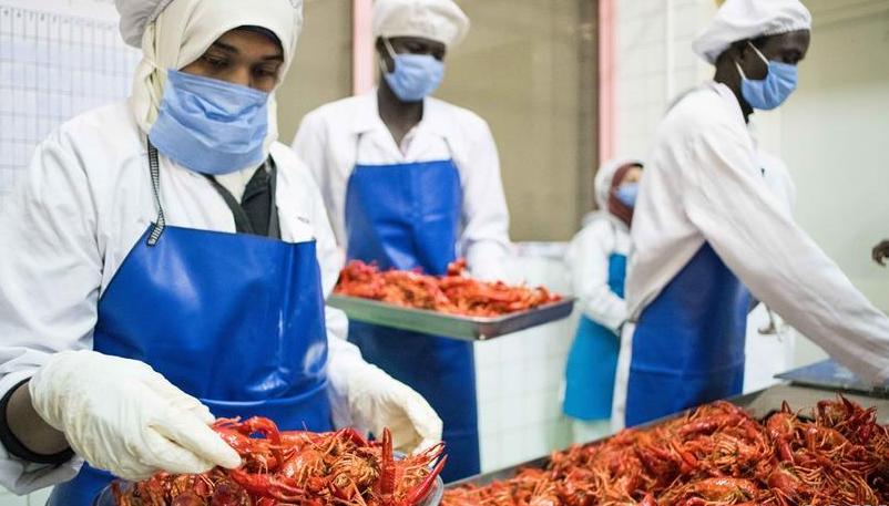 """从尼罗河畔到中国餐桌——一只""""洋""""小龙虾的36小时旅程"""