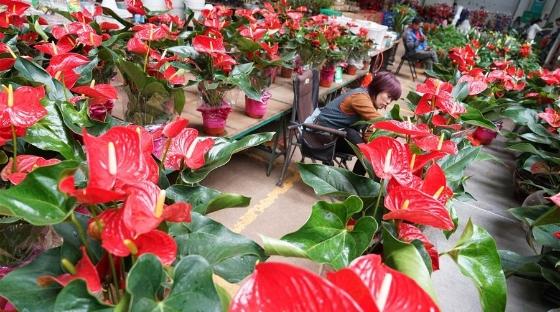 昆明國際花卉展即將舉行