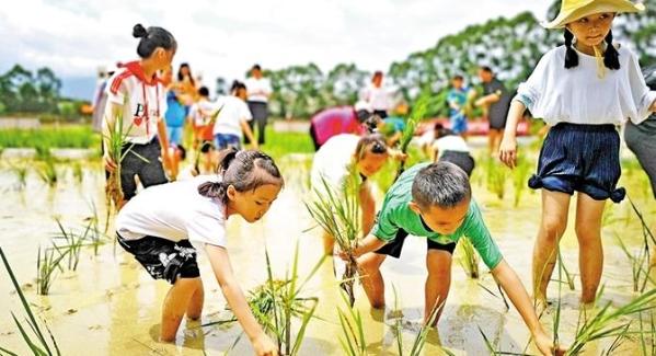 松元廈社區組織23對親子體驗暑期農耕實踐