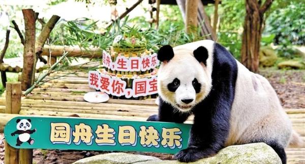 """大熊猫""""园舟""""过9周岁生日"""