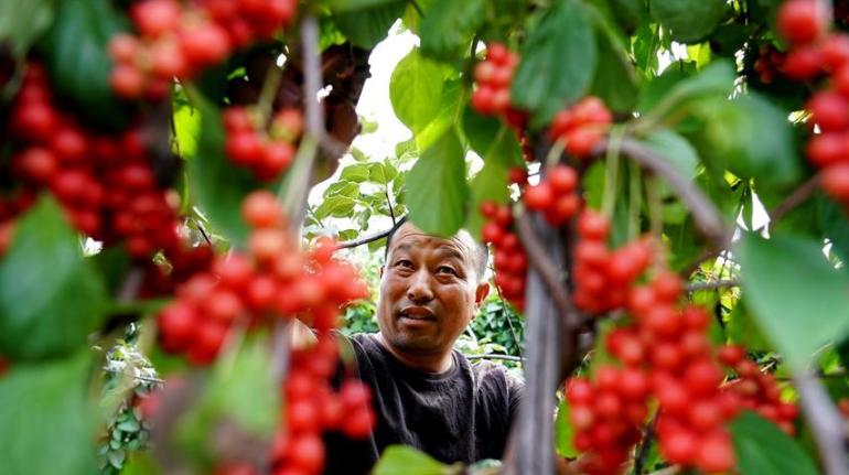 河北青龙:中药材种植促增收