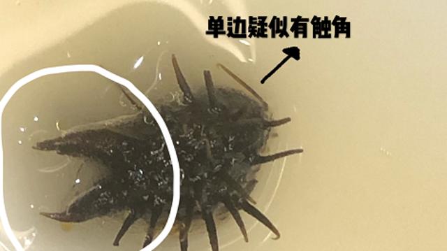 网友实名爆料!在新利18体育app知名餐厅利宝阁吃出黑色带利刺异物