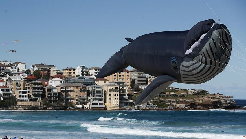 鲸鱼、骏马风筝…这样的风筝你见过吗?