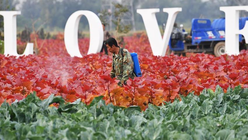 山西太原:花卉产业助增收