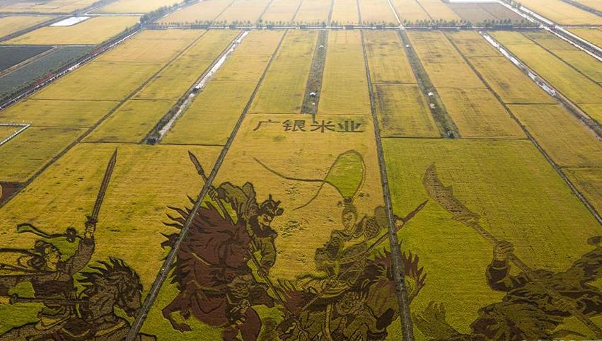 用3600亩稻田作画 绘出丰收颜色