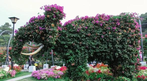 宝安视界VOL.8 | 在宝安 赏花不是春天的专利