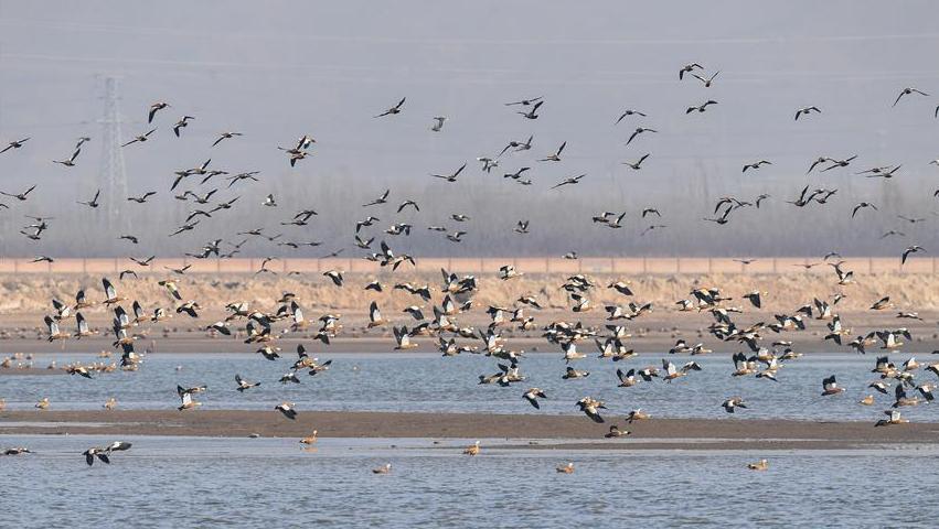 候鸟翔集海流水库