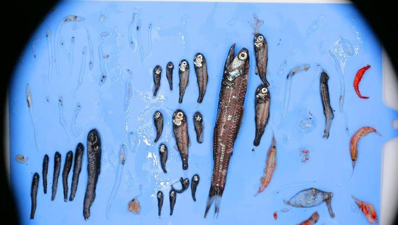 """2020年""""雪龍2""""號的南極第一網魚"""