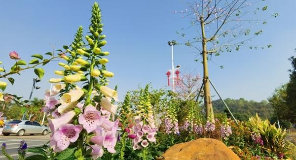燕罗街道打造百个街头小景 提升城市绿化景观品质