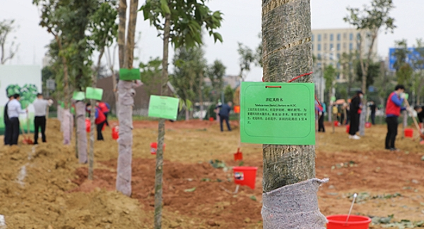 光明街道百余党员干部义务植树添新绿