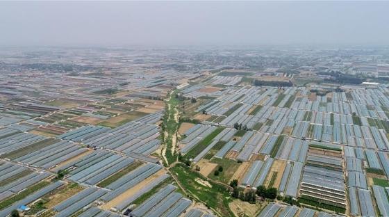 河北樂亭:鮮桃映紅豐收季