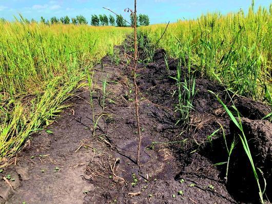 内蒙古一旗县铲毁2万多亩将熟庄稼,为完成退耕指标?