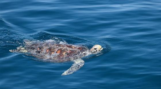 海南陵水举行2020年南海海龟放流活动
