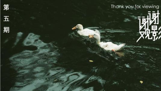 """谢谢观影VOL.5   下雨送清凉:好凉快""""鸭""""!"""