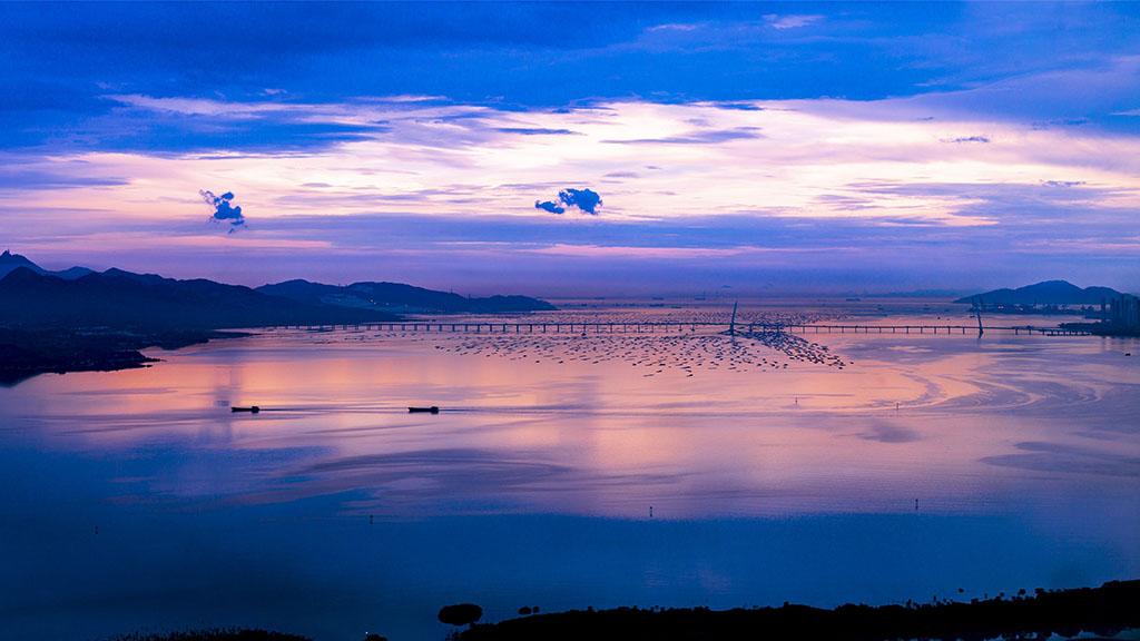 """珠三角将建19条水鸟生态廊道 深圳后海湾将打造""""鸟的天堂"""""""