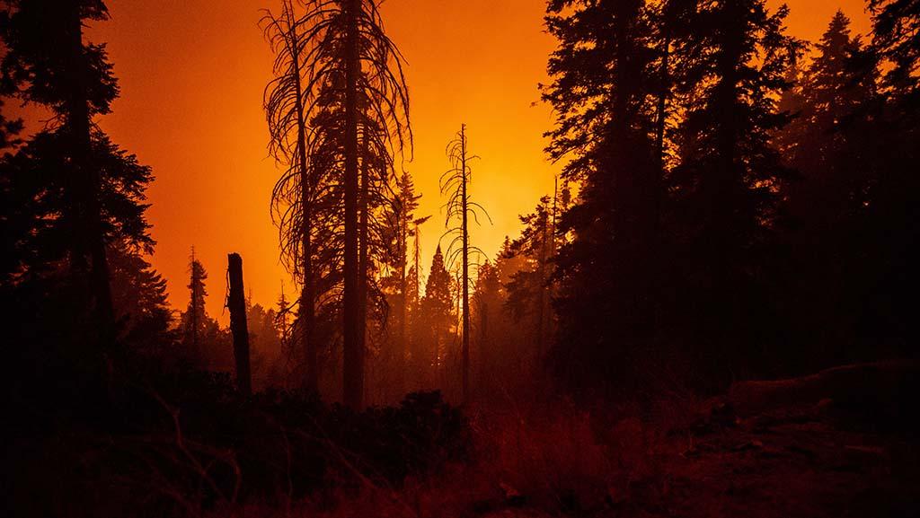 美国西部山火肆虐:著名公园关闭、州议员家被烧毁