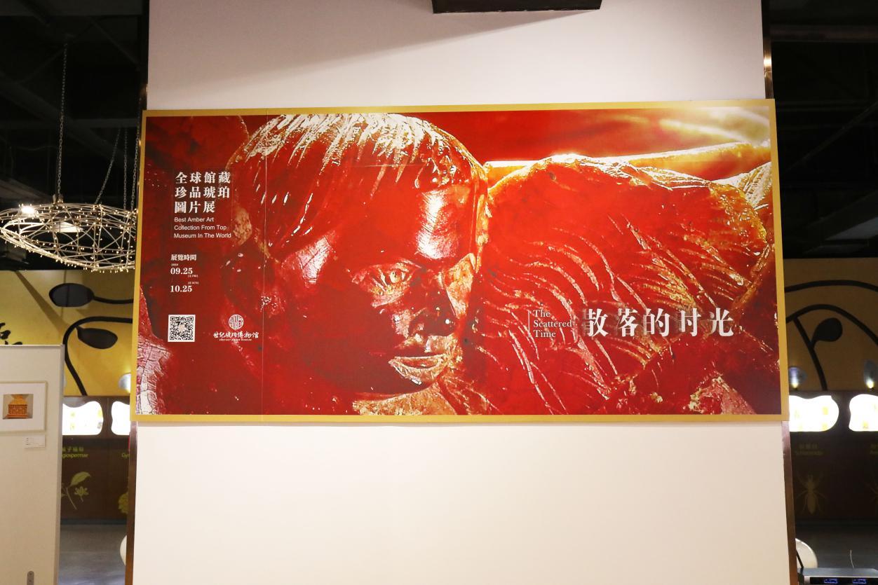 """""""散落的时光""""全球馆藏琥珀珍品图片展首次在深圳世纪琥珀馆启幕"""