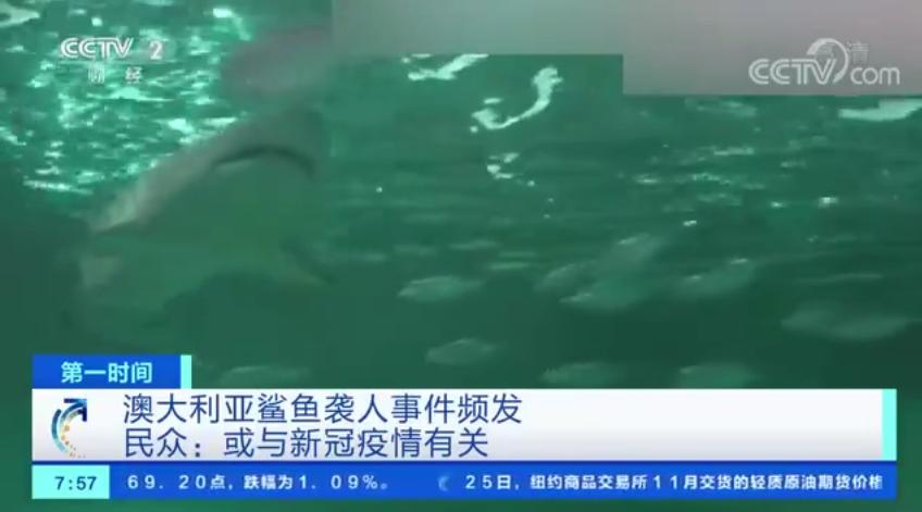 已致6人死亡!澳大利亚鲨鱼袭击事件频发!民众:或与疫情有关