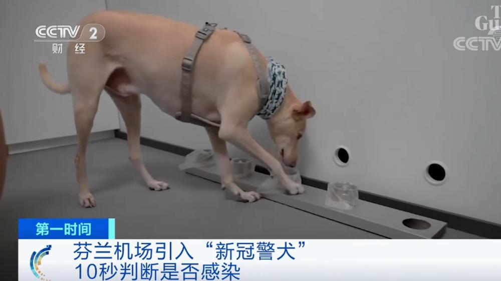 """这里的机场引入""""新冠警犬""""!10秒""""闻""""出结果→"""