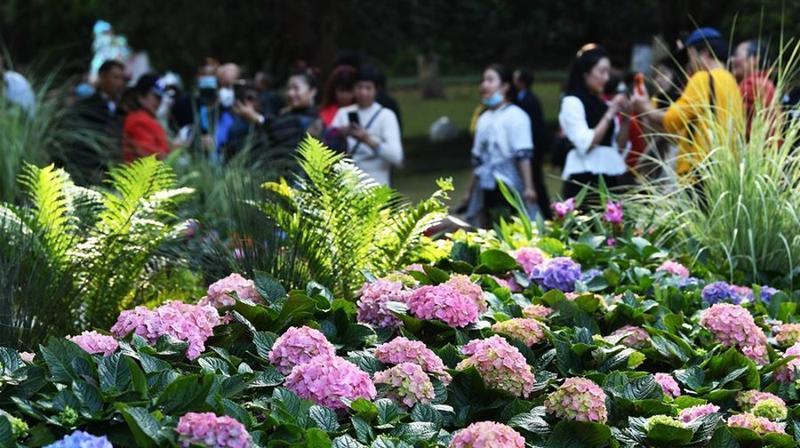 重庆:花博会人气足