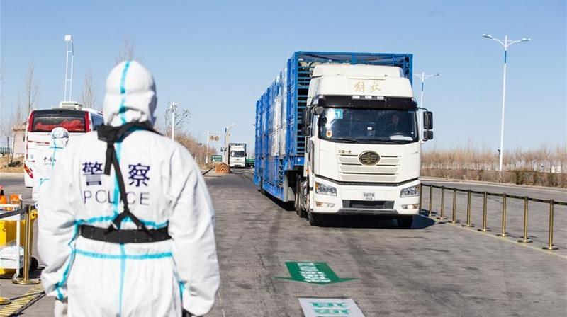 """中国开始接收蒙古国3万只""""捐赠羊"""""""