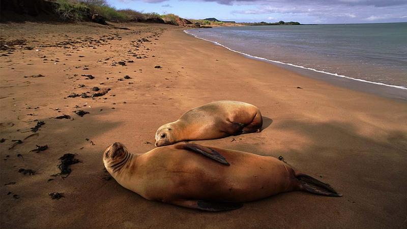 纳米比亚海滩发现7000头海狮胎儿尸体,原因不明