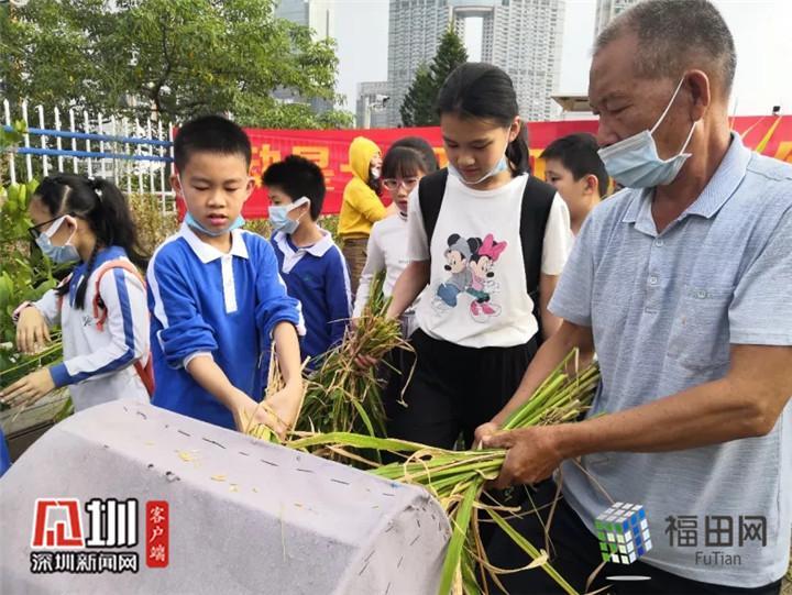 割水稻、脱谷粒...福田二附小学子一起体验劳动的快乐