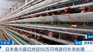 半个月,日本现多起禽流感疫情!近50万只鸡被扑杀!疫情源头或来自于...