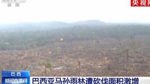 巴西亚马孙雨林遭砍伐面积增加近一成