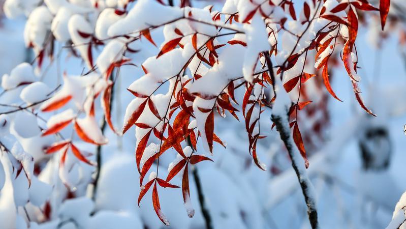 """深圳""""速冻""""至10度!你那里下雪了吗?"""