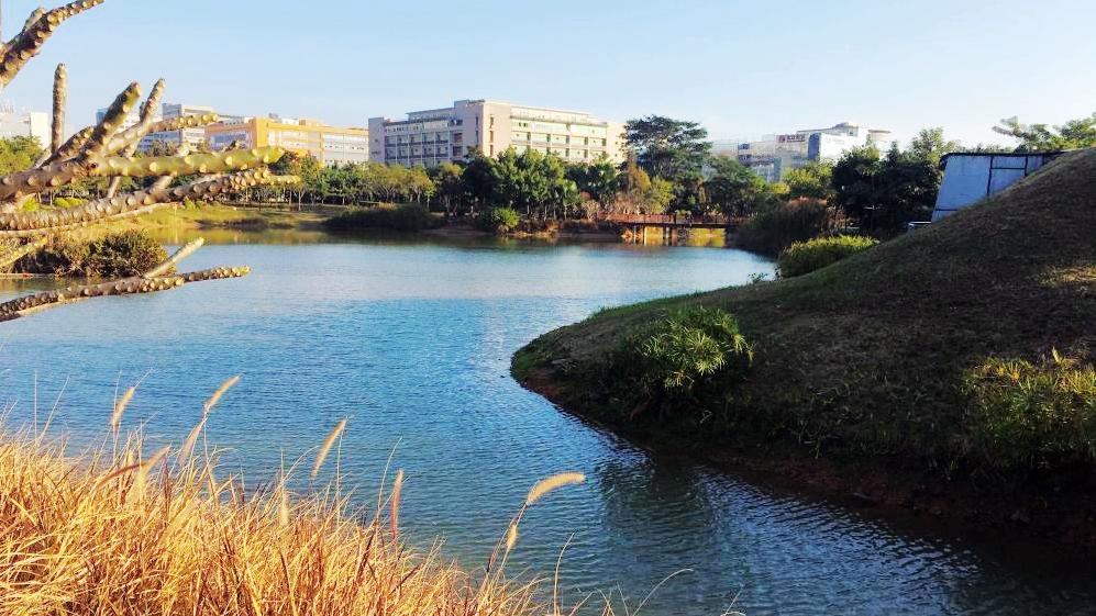今日深圳1月5日:红树林生态公园,溪流波皱碧粼粼