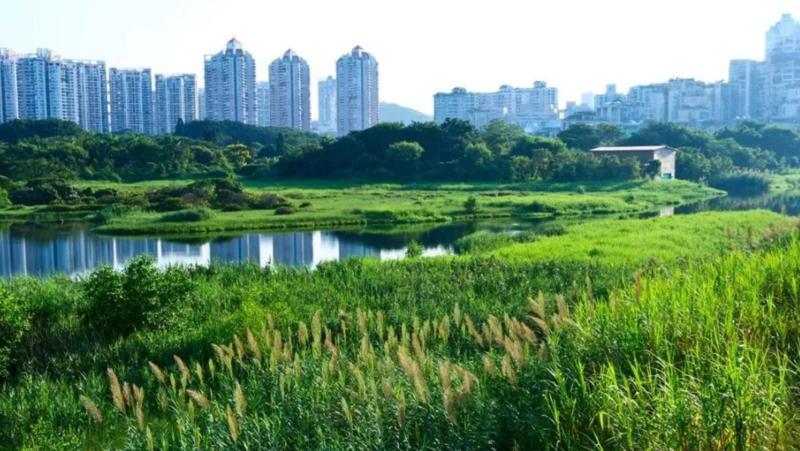 """深新早点丨深圳这个湿地公园晋升""""国家级"""",春节去打卡"""