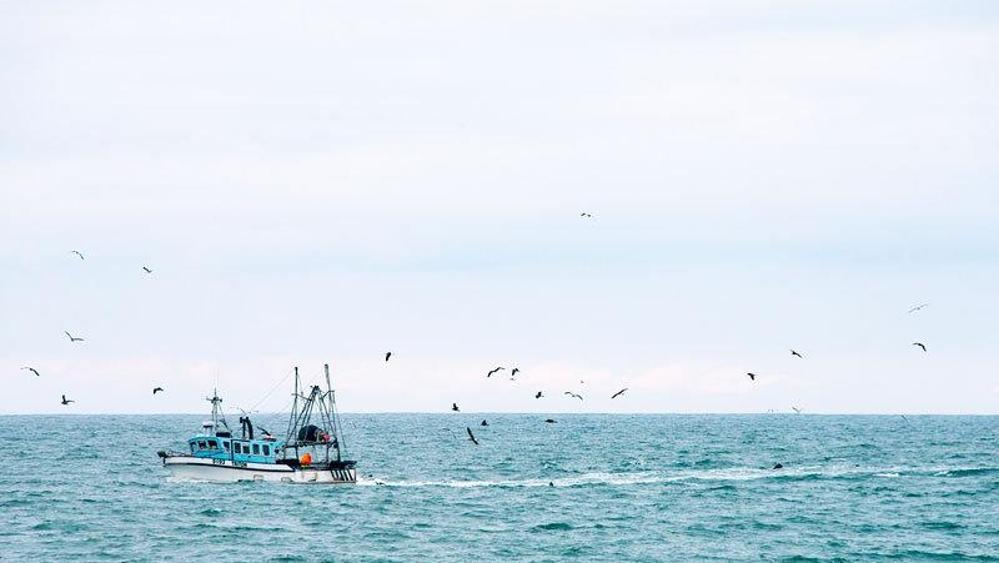 """时隔两年,日本福岛附近海域再次发现超标""""辐射鱼"""""""