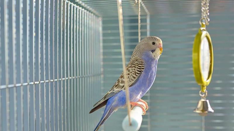 笼养鸟晋升为国家重点保护动物,以后还能养鸟吗?