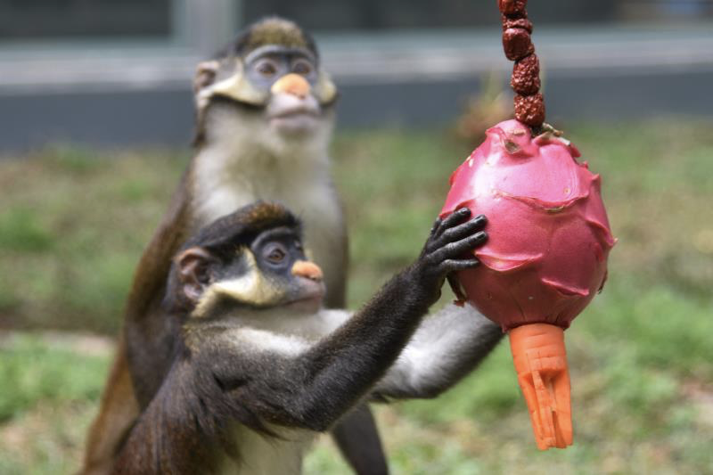"""吃""""汤圆""""玩""""花灯"""" !深圳野生动物园动物也过元宵节"""