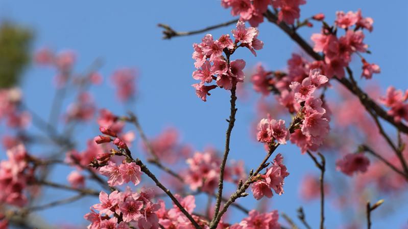 深新早点丨深圳踏青赏花十大热门公园出炉,这个公园高居榜首