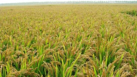 """国台办等出台""""农林22条措施"""",支持台胞台企参与农林发展"""
