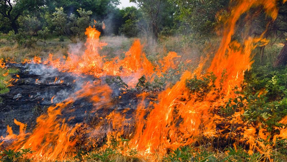 台湾阿里山发生森林大火 火势已延烧逾20小时