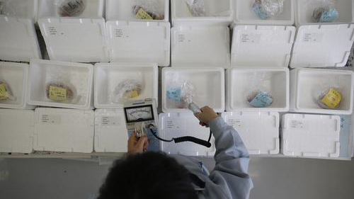 日本福岛县海域鱼类因放射性物质超标被禁止上市
