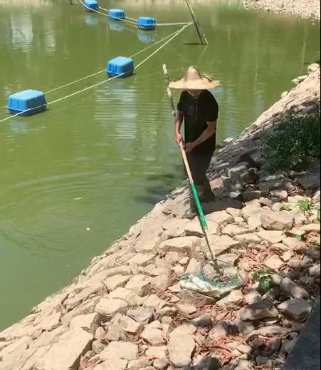 工作人员:干旱缺氧导致 网友爆料莲花山公园湖面惊现大量死鱼(图2)