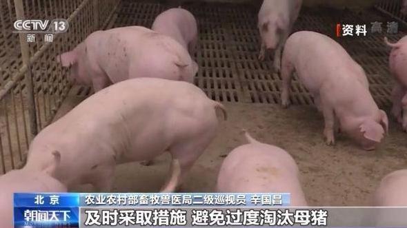 """肉价连降20周!猪肉价格何时不再坐""""过山车""""?"""
