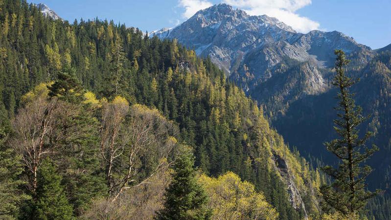 中国森林覆盖率达到23.04% 森林面积2.2亿公顷